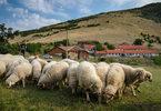 Балканът блее хайдушка песен