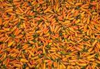 ОТ БРОЯ: На първа среща с българския морков