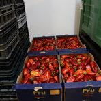 """Зеленчуците и плодовете, които попадат в спасителния резерв на Българската хранителна банка са такива, към които, изискващи потребители, които пазаруват с """"очите си"""" едва ли биха посегнали да сложат в кошницата си. Леко поувехнали, наранени, загубили първа свежест, но с малко работа с ножа, те все още са напълно годни за консумация. По данни на БХБ България разпилява около 670 хиляди тона храна по подобен начин годишно. Това означава, че средно всеки от нас изхвърля около 90-100 килограма продукти на година."""