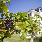 """Прекарайте един чудесен Бакхус Вино Ден с вкусна храна и хубаво вино в мелнишкия регион.Много от вината на избата са в къси, експериментални серии. Работата с множеството сортове и експериментирането с тях е тежка и изисква огромна енергия, каквато техноложката на избата, изглежда, има. """"Руми е страшно работлива и находчива и сме щастливи, че е с нас, даваме й пълна свобода на работата"""", казва Любка Зикатанова.""""Обичам да работя с дъб. Но целта ми е да е балансиран и добре интегриран. Опитвам да развия местните сортове, да откроя тероара. Искам да извлека максимума от сорта. Купажите ги създавам след ферментацията на всяко вино поотделно, за да могат да се видят първо предимствата и недостатъците му"""", казва техноложката за стила си на работа. Помага й Ристу от Македония - също така енергиен и амбициозен."""