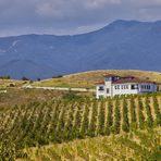 """Прекарайте един чудесен Бакхус Вино Ден с вкусна храна и хубаво вино в мелнишкия регион.Тези, които познават Вила Мелник и техните вина, знаят, че това е една от """"най-българските"""" изби. Семейството се гордее с местния си произход, с връзката си със земята и виното, с наследството на региона и иска да възроди славата на локалните сортове - широка мелнишка лоза и дъщерните й мелник 55, руен, сандански мискет. А постиженията на избата сочат, че мисията е възможна, ако имаш цел и работиш за нея.Сред богатото й портфолио има бижута, които впечатляват дори най-пренаситените потребители - от """"Аплауз Резерва Каберне Совиньон 2013"""", който наскоро заслужи златно отличие от престижния конкурс Mondiales des Vins, през ефирния оригинален купаж между пино ноар и мелник до очарователната """"различност"""" на мавруда, отгледан в масивите на избата, който Никола Зикатанов шеговито нарича """"мелнишки мавруд"""". Сред съкровищата на избата отскоро е и """"Bergule Широка мелнишка лоза 2013"""" - едно наистина различно и елегантно вино, с дълбочина и финес и вълнуващи аромати."""