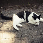 Лозето се охранява от котките на съседите, които се разхождат необезпокоявани в него и прогонват птиците. Цялата статия може да прочетете тук.