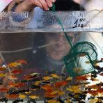 Задната част на пазара е запазена за акваристите, които имат силно присъствие на Подуяне.Цялата статия може да прочетете тук.
