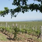 """Пътят на винарна """"Загрей"""" започва през есента на 1998 г. в село Виница, община Първомай. Тази част на Горнотракийската низина има изключително благоприятни условия за отглеждане на грозде. """"Загрей"""" разполага със 120 хектара собствени масиви, разположени около самата винарна, като те са само червени сортове - мавруд, каберне совиньон, сира и мерло.Всичко за Бакхус StrEAT Fest вижте тук."""