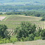 """Винарна Братанов e сред членовете-учредители на Българска Асоциация на на Независимите Лозаро-винари – """"новата вълна"""" български винопроизводители, които поставят акцент върху изразяването на тероара и прилагането на занаятчийски подходи за винификация.Всичко за Бакхус StrEAT Fest вижте тук."""