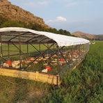 """Чифлик Ливади е първата поликултурна ферма в България, в която се отглеждат на пасища различни животни. Не се използват антибиотици, соя, трупно брашно, генномодифицирани продукти. Намира се на 6 км. от гр. Сандански на част от територията на винарна """"Дамяница"""", прилежащите пасища както и пасища в различни села около града.В Чифлик Ливади осигуряват на всяко животно достъп до паша, чист въздух, слънце и вода, като постоянно сменят територията, за да се прекъсва цикълът на паразитите.Повече за поликултурното фемерство може да разберете от най-известния фермер в света - Джоел Салатин, който ще гостува в България с майсторски клас, лекция и вечеря.Всичко за Бакхус StrEAT Fest вижте тук."""