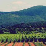 Семейният проект Еолис Естейт стартира през 2005 с масив от 2,2 ха собствени лозя край с. Малко Градище, община Любимец, в полите на Източните Родопи. Вината Еолис се произвеждат в лимитирани серии от сортовете мерло, каберне совиньон и фран, сира, гевюрцтраминер, вионие и совиньон блан. От 2012 винификацията се извършва под напътствията на швейцарския енолог-консултант Марк Вундерли, който създава стила на Еолис от самото му начало. Вината отлежават в 400-литрови бъчви от френски дъб до постигане на елегантна хармония между експресивен плодов букет, фини дъбови аромати и велурени танини. Избата е част от Асоциацията на независимите винаро-лозари.Всичко за Bacchus StrEAT Fest 2 вижте тук.Купете онлайн билет от тук: