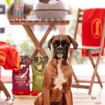 Компанията Husse е основана през 1987 г. в Швеция. Днес Husse продава и предлага на пазара широк спектър от натурални висококачествени Супер Премиум храни, продукти и аксесоари за кучета, котки и коне, които се пристигат с безплатна доставка директно до вратата на клиентите в повече от 60 страни. Продуктите на Husse са направени и разработени с висококачествени натурални съставки и се произвеждат само в един единствен завод за целия свят, като по този начин компанията гарантира за качеството на своето производство.