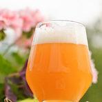 София Електрик Брюинг е най-новата крафт пивоварна до сърцето на София в стария хладилен завод!Идеята зад пивоварната е проста! Да правят бирите, които те обичат и да създадат компания, която да вдъхновява други!На Бакхус фест ще предложат наливни Milkshake IPA 7% с Маракуя, Оverflow IPA 6.4% с много хмел, KISEL GOSE 4% с количество лактобацили, което може да се мери с всяко кисело мляко, 42 Pale Ale 5% с допълнително количество тропически плодови вкусове и за десерт кен 6 Months Behind Schedule Imperial Stout 9%, защото трябва и да се показват мускули.Наздраве!