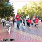 Purina ProPlan e супер премиум храна за кучета разработена от експертите на Purina, която подобрява живота на домашните любимци чрез добро хранене. Тъй като вярваме, че добрата храна е отправна точка за добро здраве, всяка храна на PURINA гарантира 100% от необходимите хранителни вещества. Богатият асортимент от храни осигуряват оптимално хранене чрез задоволяване на точните нужди във всеки етап от живота на домашния любимец.По време на събитието от Purina ProPlan ще се погрижат за гурме изживяването на домашните любимци чрез множество награди и лакомства на техния щанд. Асен Аролски, треньор на кучета от AATraining и дългогодишен партньор на Purina ProPlan, ще се погрижи за доброто настроение на домашните любимци чрез забавни игри и демонстрации. Участвайте в пърата обучителна тренировка на своето куче или опитайте възможностите му на някое от тренировъчните трасета и получете награда от Purina ProPlan.