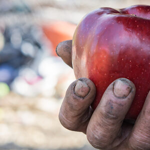 Алинеите на глада