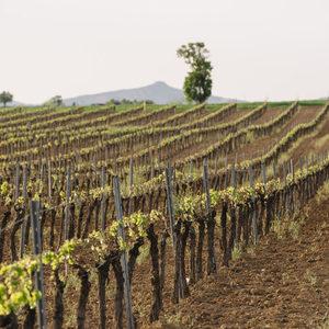 Лоша година за виното в Испания