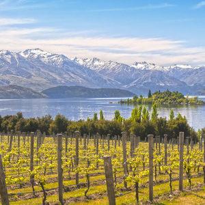 Нова Зеландия въведе защитени географски указания