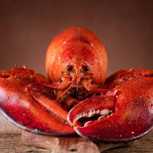 Lobster rights