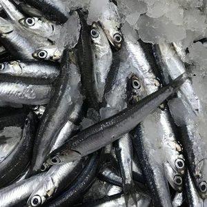 Balkan Fish