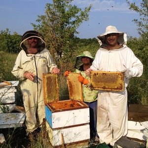 Пчелен мед Курдов