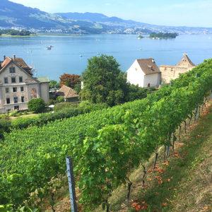 Другата Швейцария: вино, лозя и рози