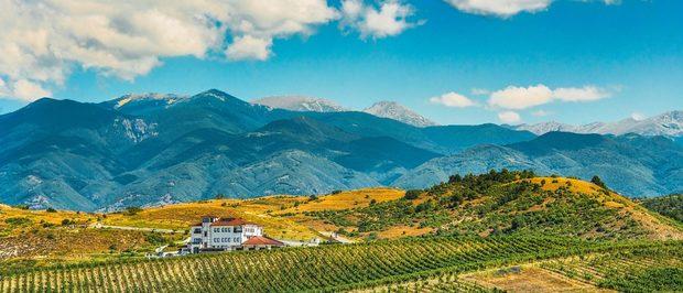 """Тези, които познават Вила Мелник и техните вина, знаят, че това е една от """"най-българските"""" изби. Семейството се гордее с местния си произход и 200 годишните традиции във винопроизводството на рода им; с връзката си със земята и вино; с наследството на региона и иска да възроди славата на локалните сортове - широка мелнишка лоза и дъщерните й мелник 55, руен, сандански мискет.Специално за първото издание на Бакхус Коледен Гурме Базар те ще представят младото вино Young & Crazy 2019, както и новото им десертно вино Sweet Wine Melnik 55 Late Harvest. А какво е коледен фестивал без ароматно греяно вино? Не пропускайте щанда им, където ще ви посрещнат и изпратят с усмивка.Всичко за първия Бакхус Коледен Гурме Базар вижте тук.Научавайте новостите за събитието във Facebook.Купете билет онлайн с намаление тук."""