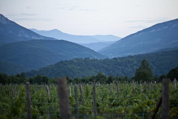 """Поради ограничените количества на преработваното грозде, произвежданите във ВИ """"Боровица"""" тихи и естествено пенливи вина са със силно изявен характер. Една част от лозята са разположени под известните белоградчишки скали върху червена песъкливо-камениста почва.Всичко за Бакхус StrEAT Fest вижте тук."""