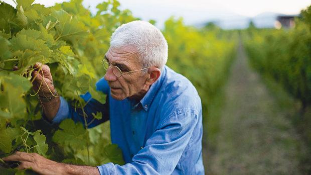 Янис Бутарис, патриархът на гръцкото винопроизводство и настоящ кмет на Солун, инспектира лозята си в Науса