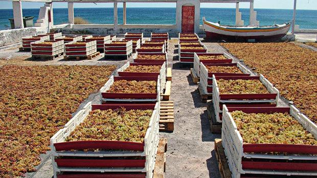 Гроздето на изба Gai'A на Санторини съхне на слънце, преди да бъде направено на винсанто, едно от емблематичните десертни вина на Гърция