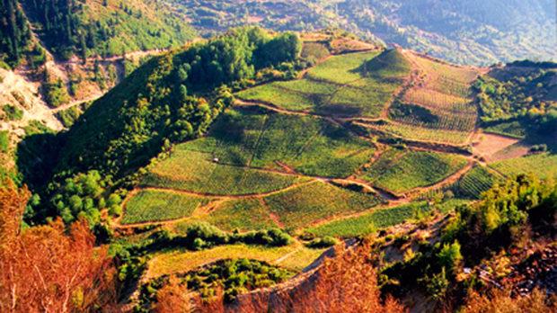 Лозовите масиви на избата Katogi & Strofilia в Мецово (Епир), разположени на около 1000 м надморска височина