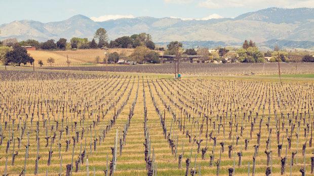 """Част от най-старото лозе на Санта Барбара Каунти - посаденото през 1968 Вина де Санта Инес, сега се обработва от """"Калира"""""""