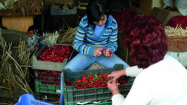 В биофермата на Рендек са селектирали свои семена за 13 от общо 70-те сорта люти чушки, коиот се отглеждат в Унгария.