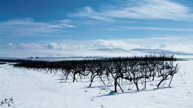 Климатът на Голанските възвишения е близък до този на винените райони на Европа