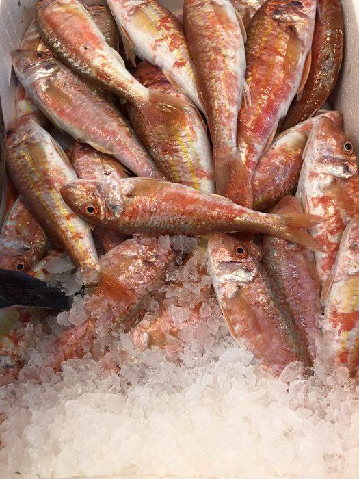 Всичко за Бакхус Fish Fest вижте тук.Научавайте новостите за събитието във Facebook.КУПЕТЕ БИЛЕТ ОНЛАЙН >>>